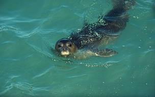 Deniz Koruma Alanı ve Biyoçeşitlilik | WWF